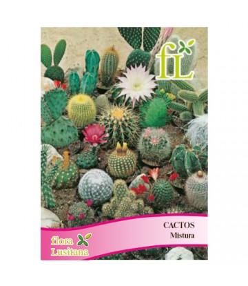 Sementes de Flor Cactos...