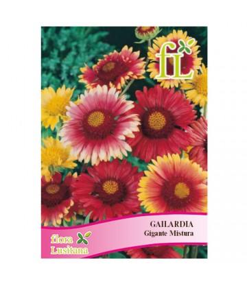 Sementes de Flor Gaillardia...