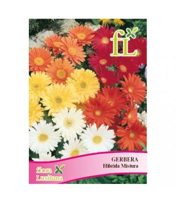 Sementes de Flor Gerbera...