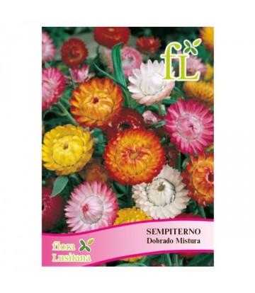 Sementes de Flor Sempiterno...