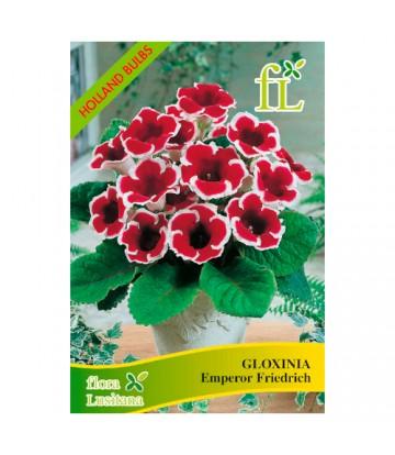 Sementes de Flor Gloxinia