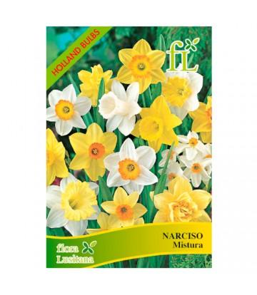Sementes de Flor Narciso