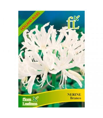 Sementes de Flor Nerine