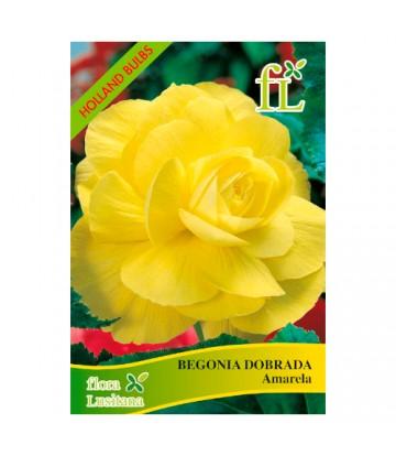 Sementes de Flor Begónia