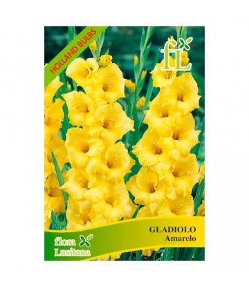 Sementes de Flor Gladiolo