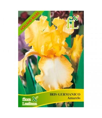 Sementes de Flor Iris