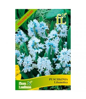 Sementes de Flor Puschkinia...