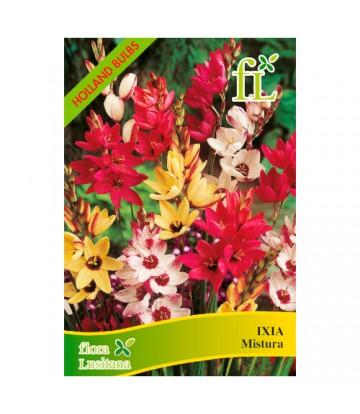 Sementes de Flor Ixias Mistura