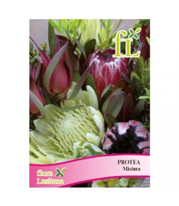 Sementes de Flor Protea