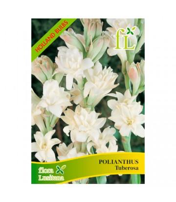 Sementes de Flor Polianthus...