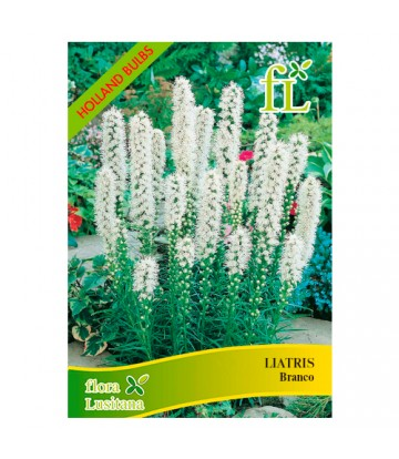 Semente de Flor Liatris