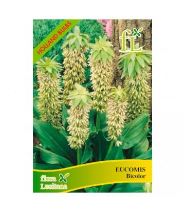 Sementes de Flor Eucomis...