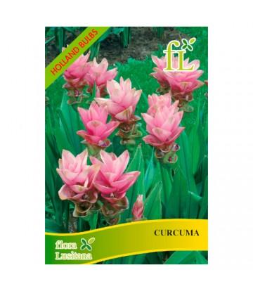 Sementes de Flor Curcuma